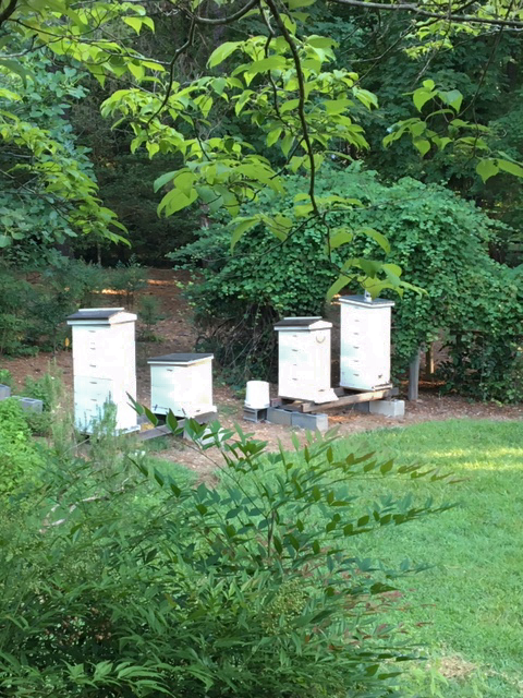 Will and Martha Krauss' beehives.  Photo by Martha Krauss