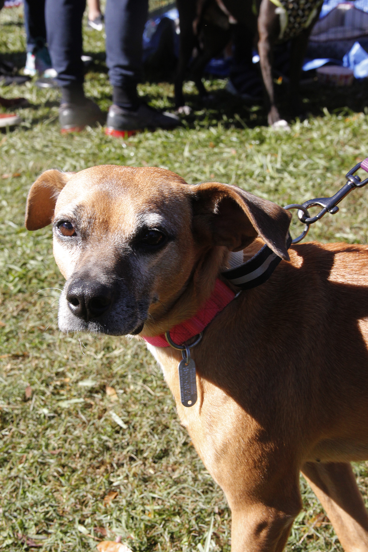 Daisy is available for adoption.