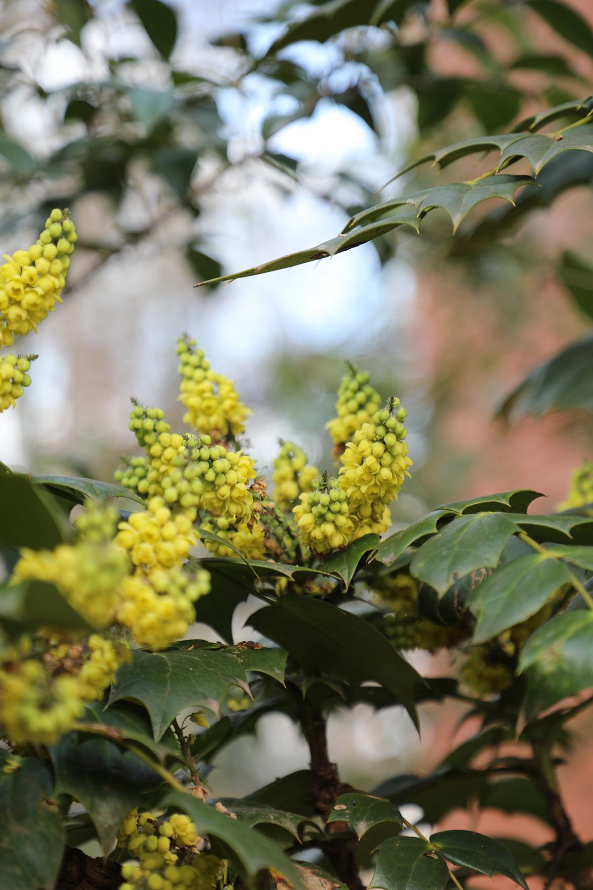 spring flowers 4.jpg