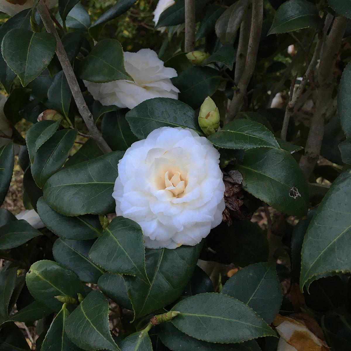 spring flowers 8.jpg