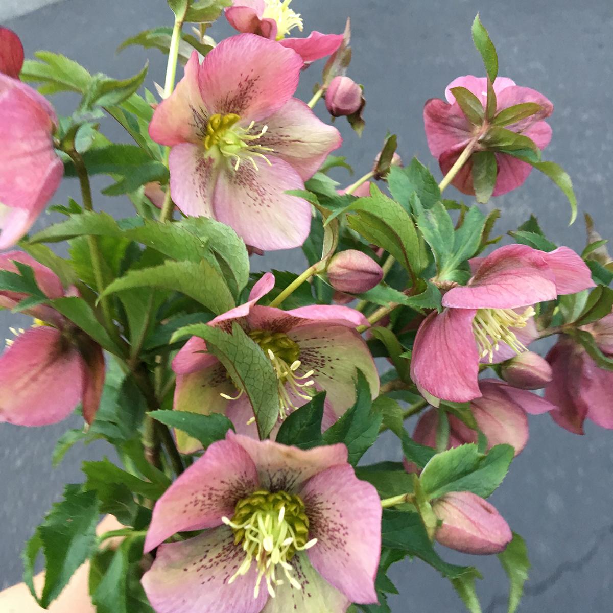 spring flowers 7.jpg