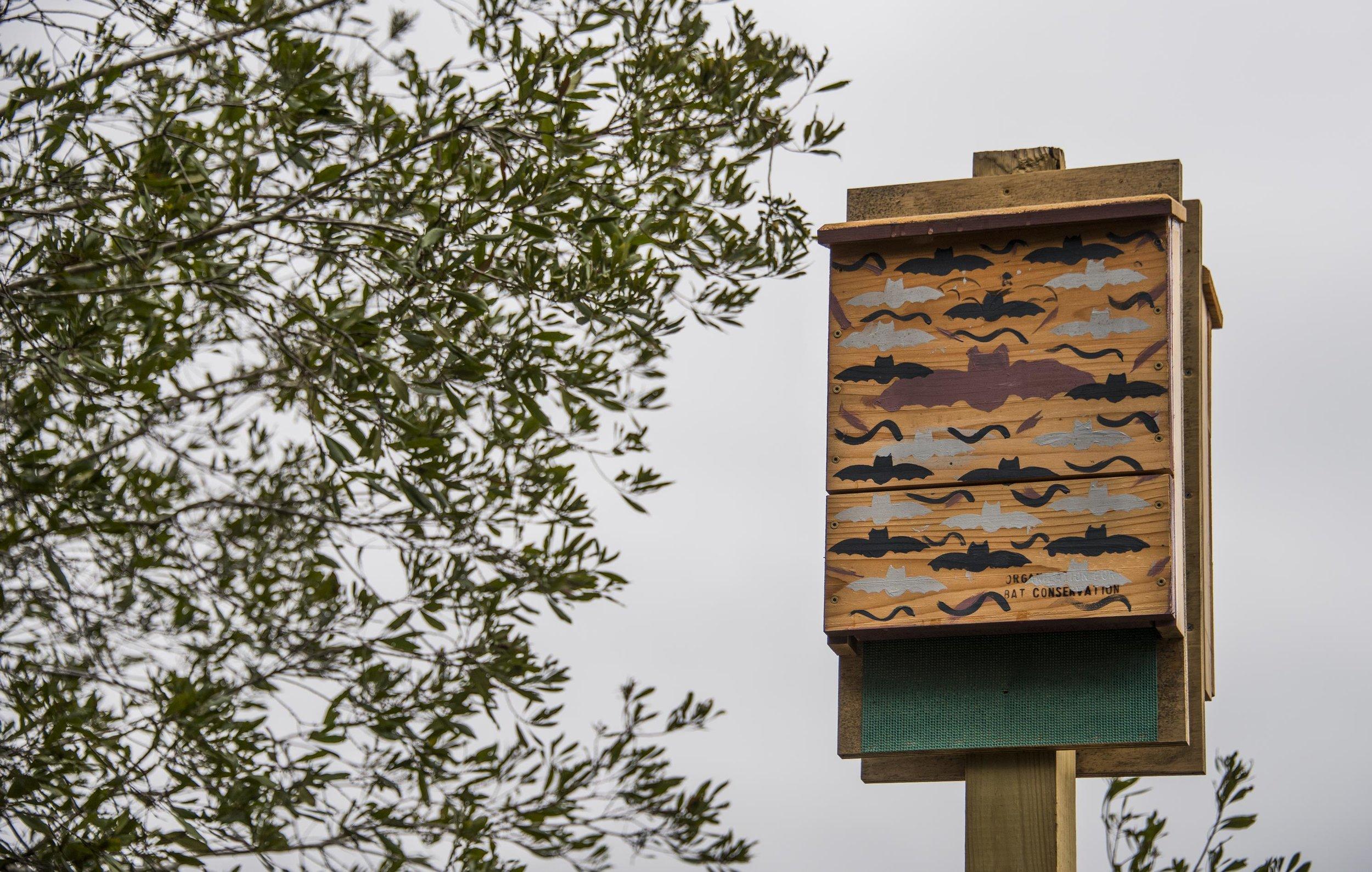 A common design for a    bat house