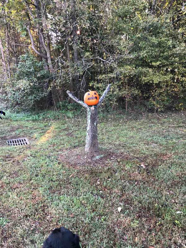 carolyn tree stump pumpkin.jpg
