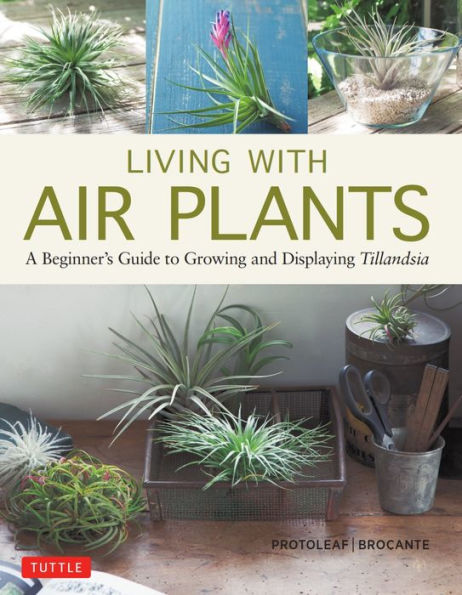 living with air plants.jpg