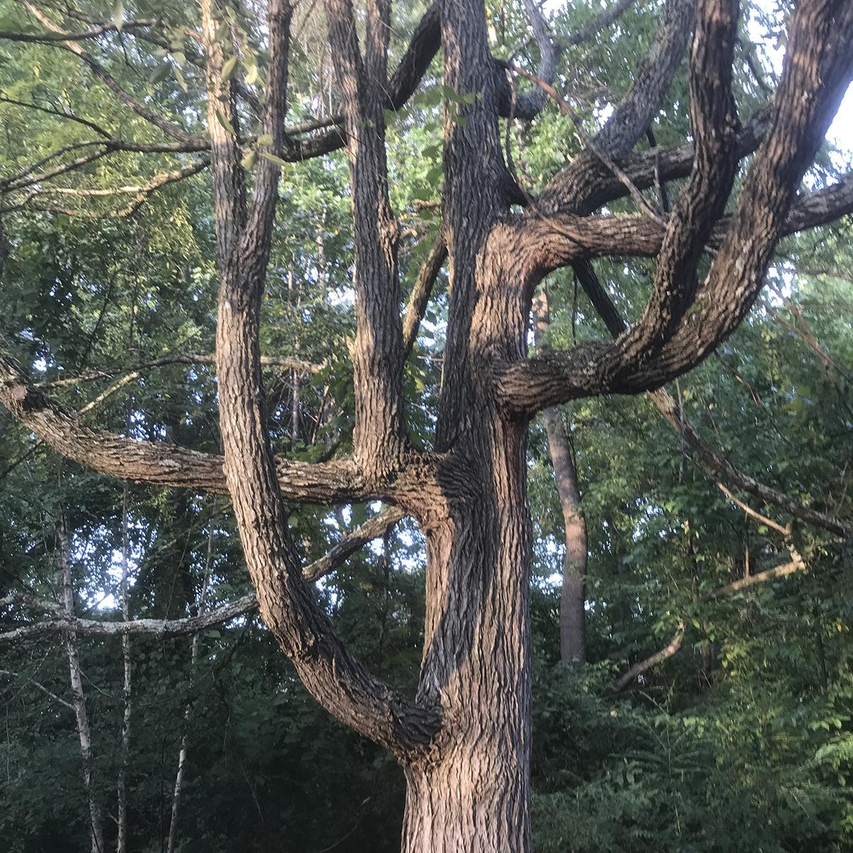 funky tree.jpg