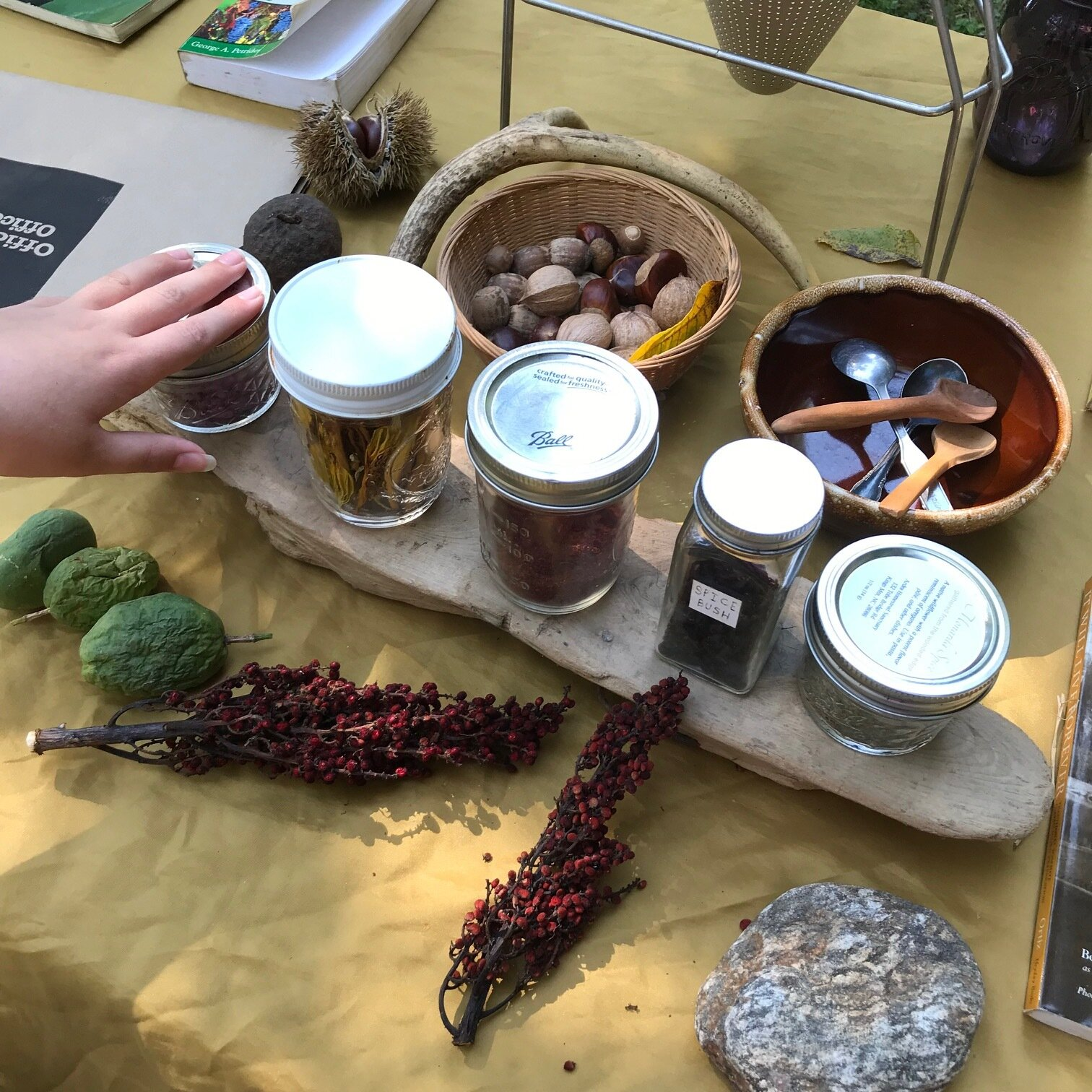 From  Eating the Wild: a foraging primer and plant walk , Sunday, September 22 in Matthews.