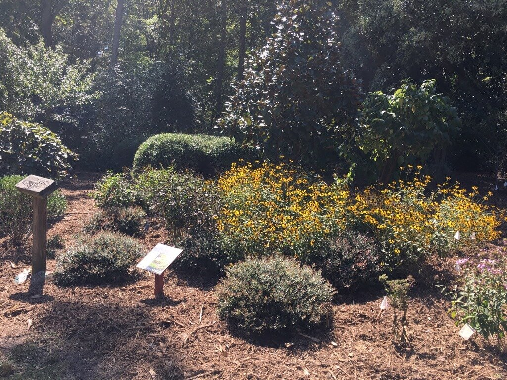 Native garden at Squirrel Lake Park maintained by HAWK (photo courtesy HAWK)