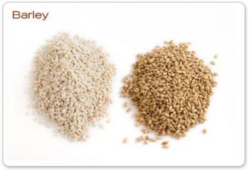 barley_big-e1374947186489.jpg