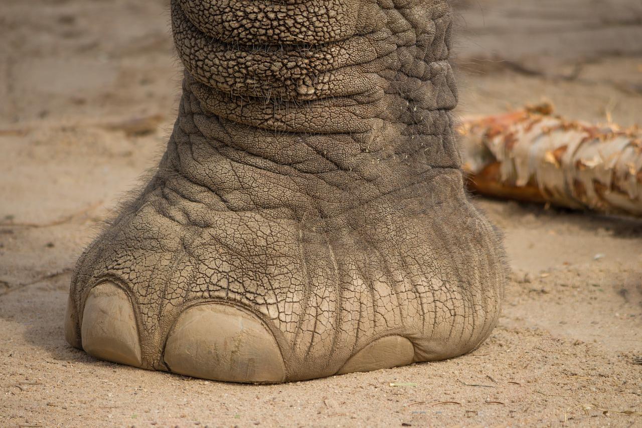 elephant feet.jpg