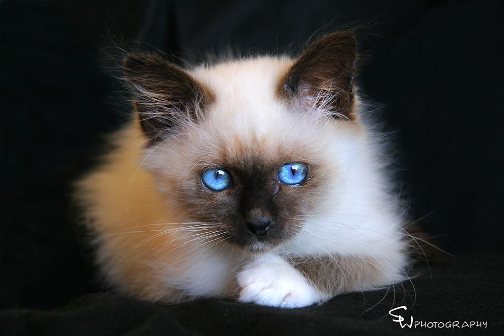 blueeyefb.jpg