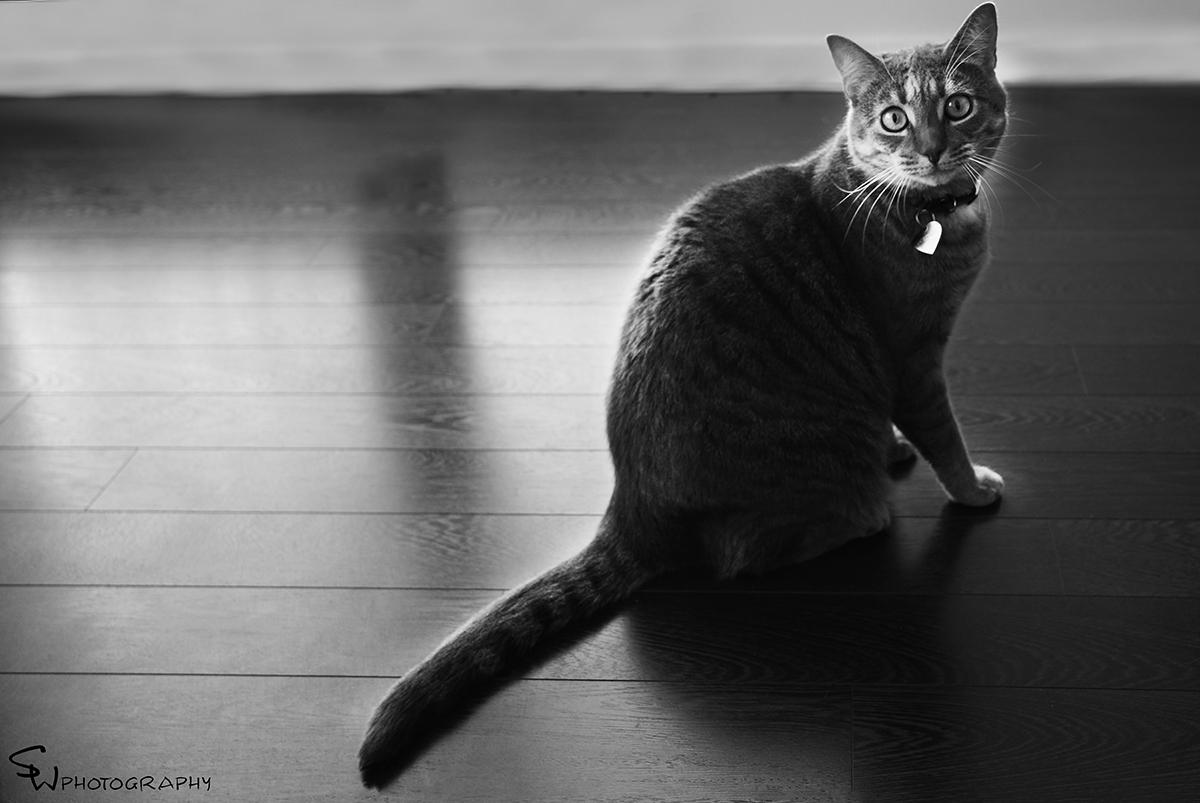 kittyfb.jpg