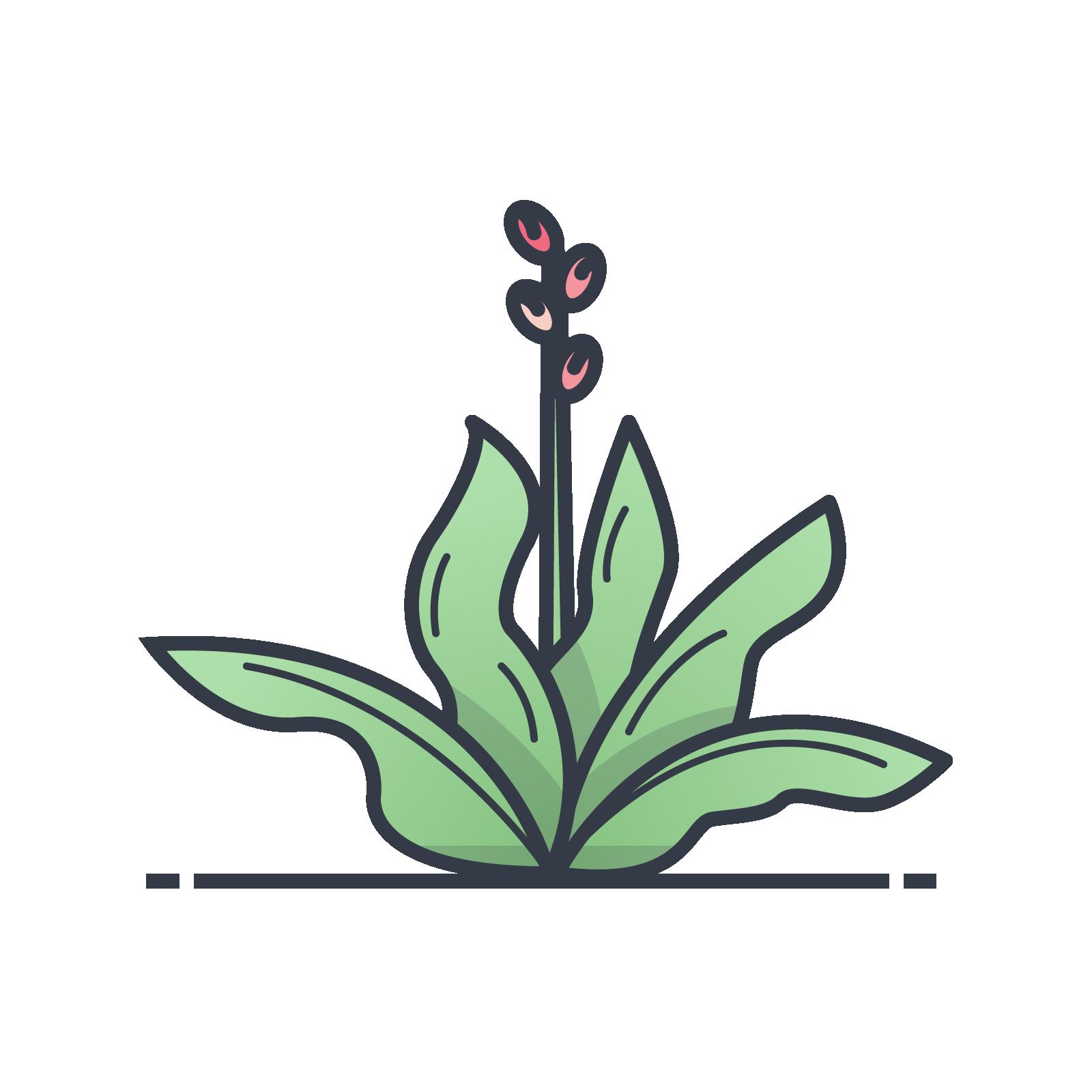 Bloom_Presentation_4.png