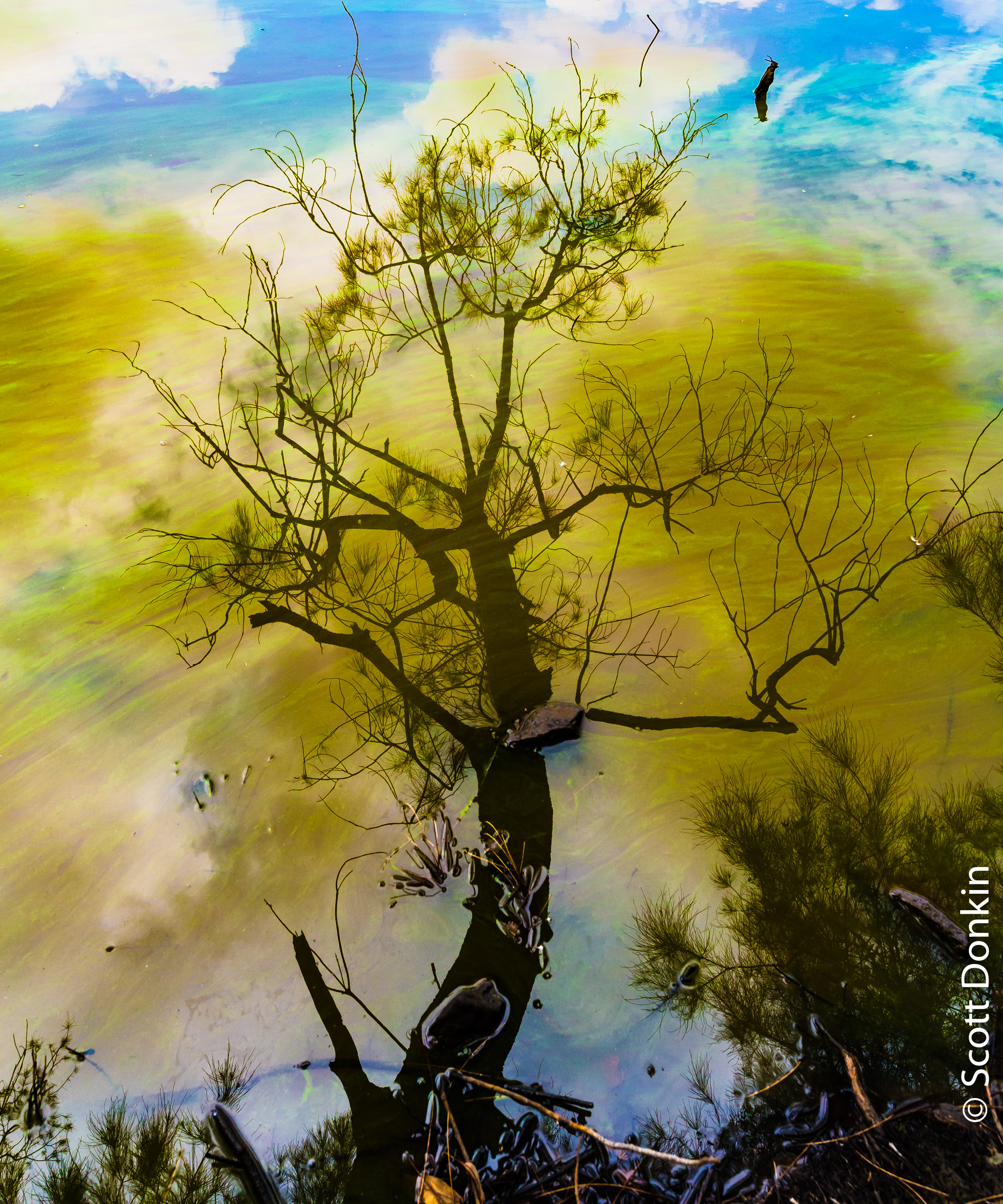 Polluted waters. Longneck Lagoon, Cattai, New South Wales.
