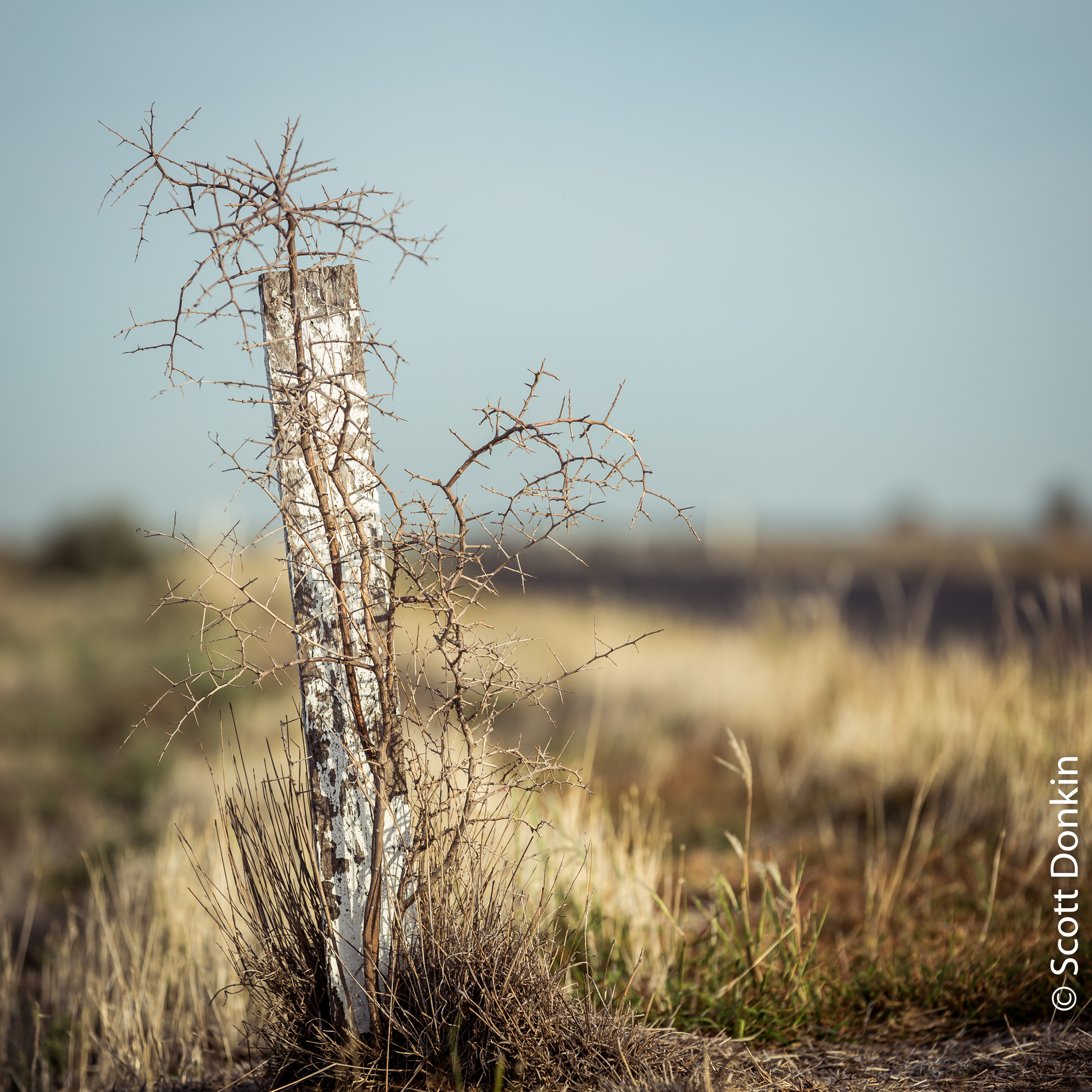 Roadside post. Hay, New South Wales.