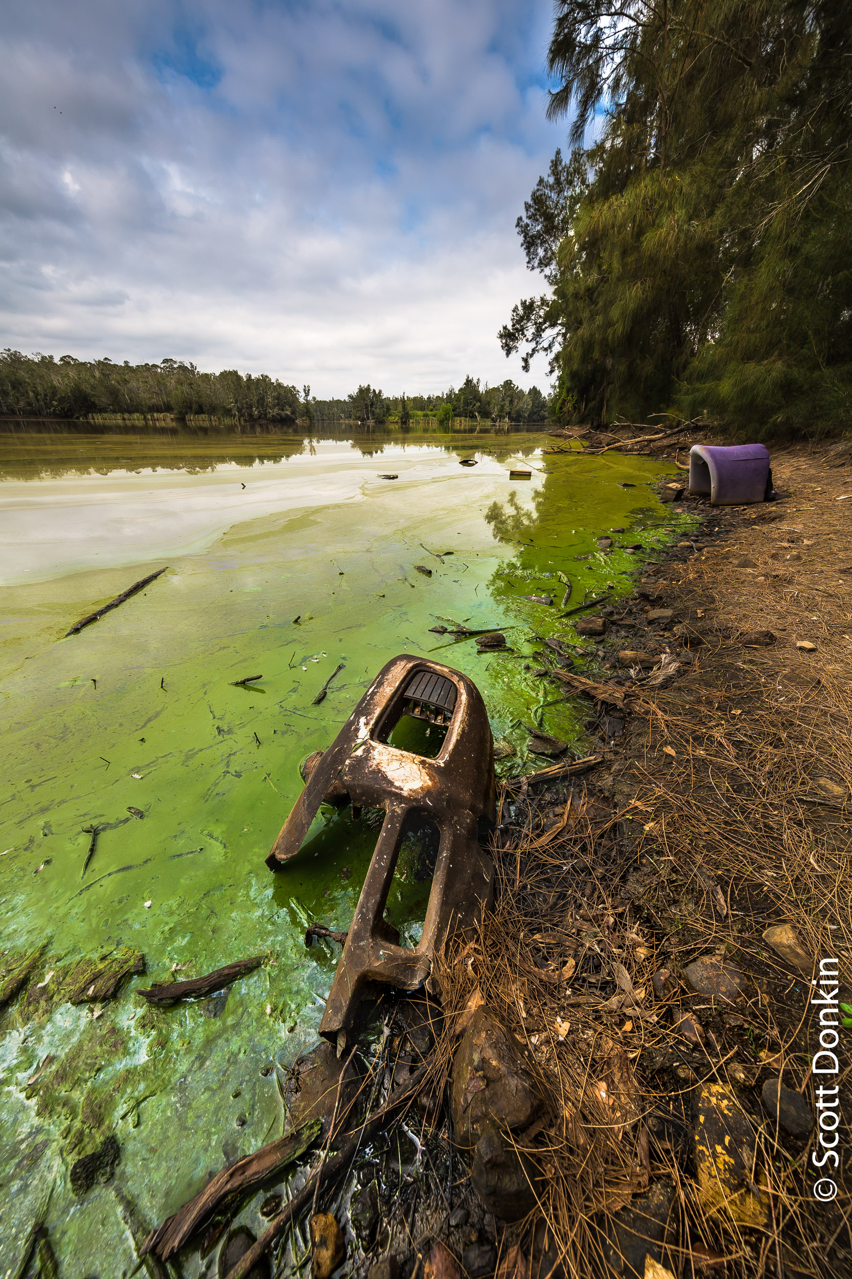 Polluted lagoon. Longneck Lagoon, Cattai, New South Wales.