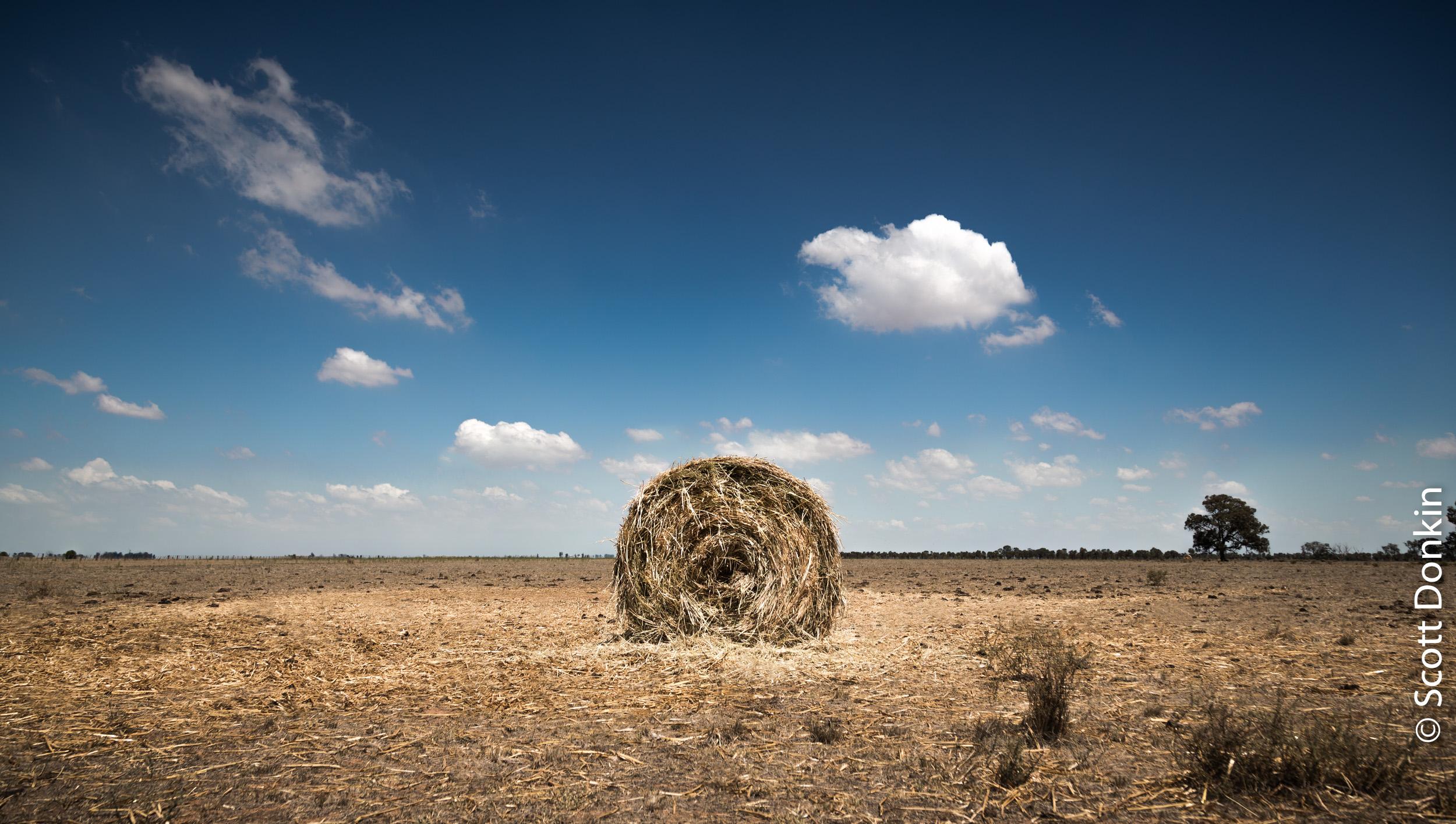 Dry farmland. Country Victoria.