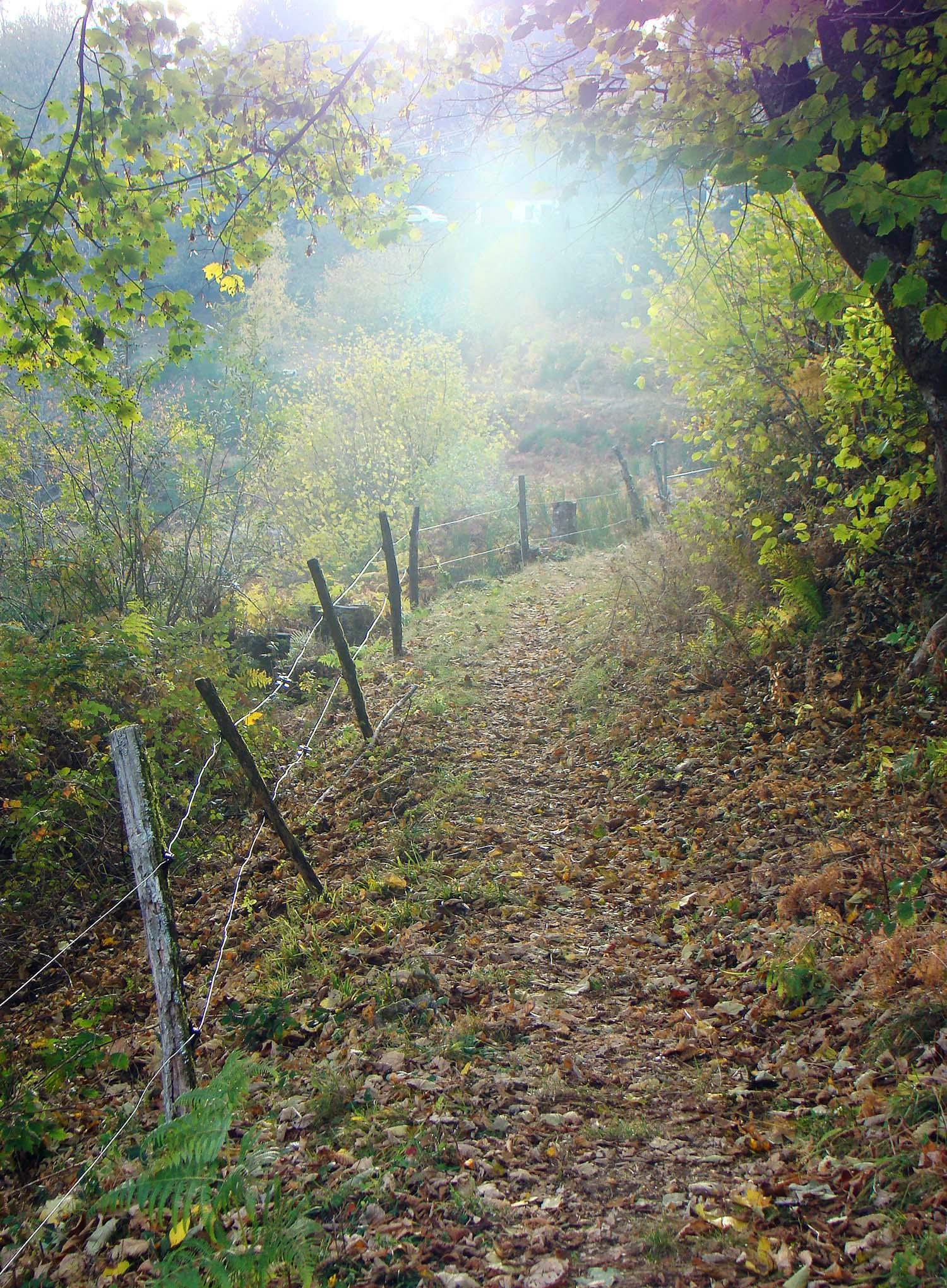 Sunshine_path.jpg