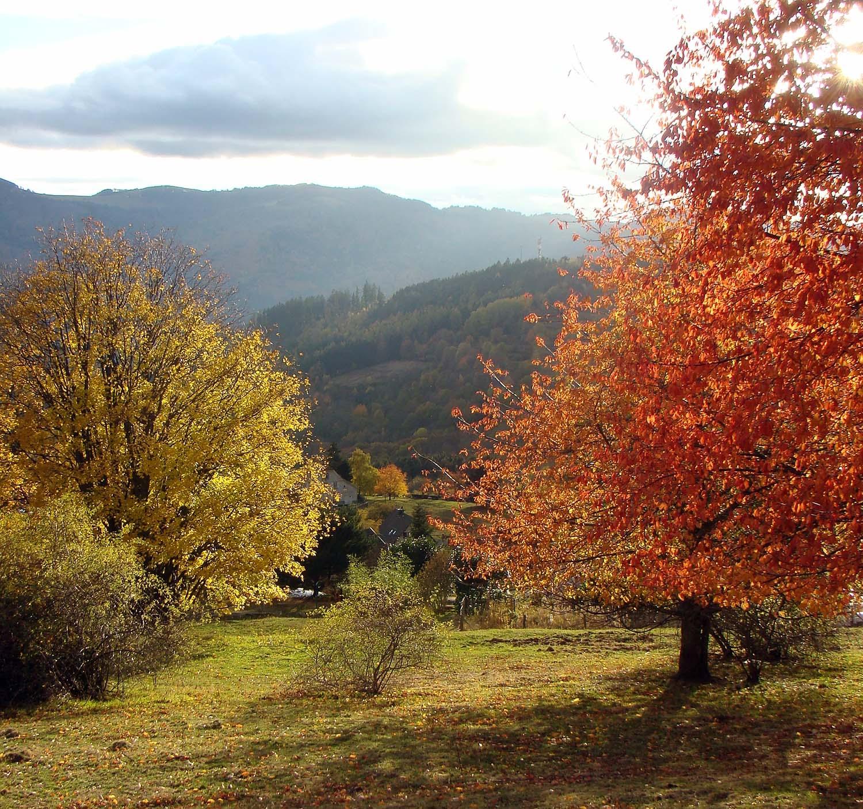 colourful_trees.jpg