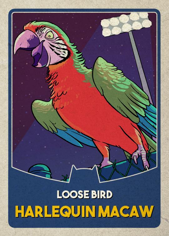 macaw1old.jpg