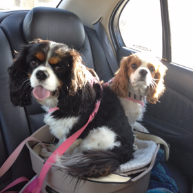bella and jessie.jpg