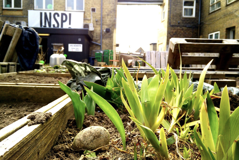 URBAN GARDENING - I vores gårdhave og vindueskarme blomstrer lidt af hvert, fordi forskellige ildsjæle tager sig af alt fra den daglige vanding til hvidløgsworkshops. Har man en passion for levende ting er der rig mulighed for at slå sig løs inden for plantekassernes rammer.