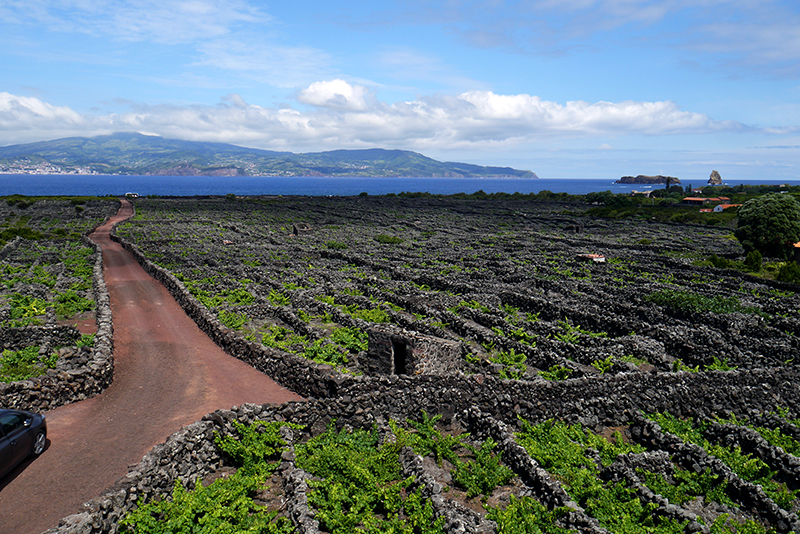 Azores-vineyard#7-seaback.jpg