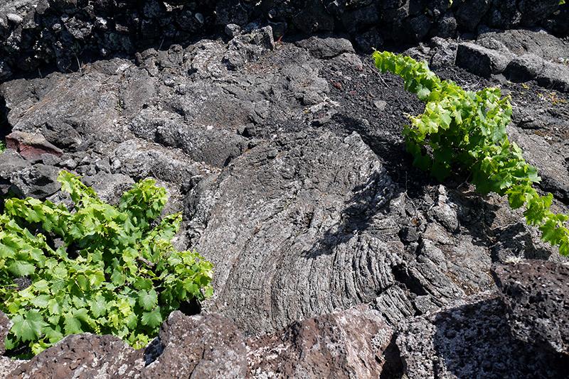 Azores-vineyard#6-soilsurface.jpg
