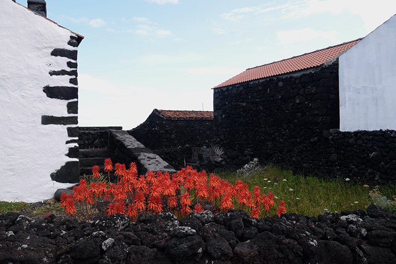 A local 'adega' (winery) built with the same volcanic rocks that line the vineyards