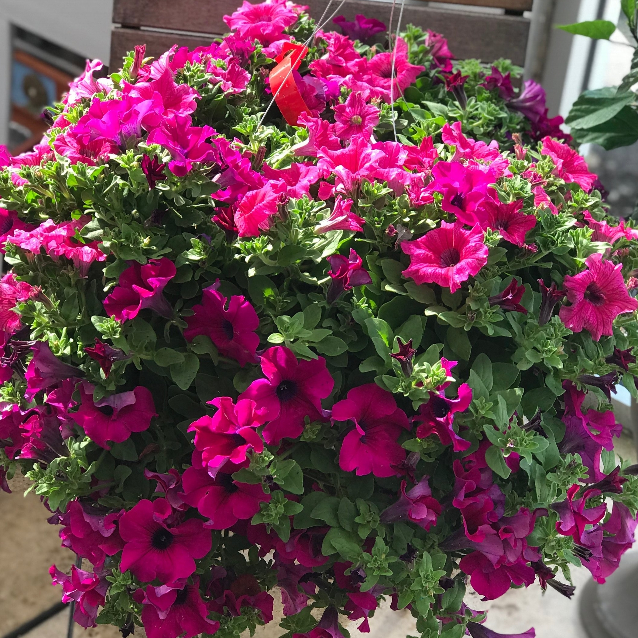 Hanging Basket $18.99-$39.99