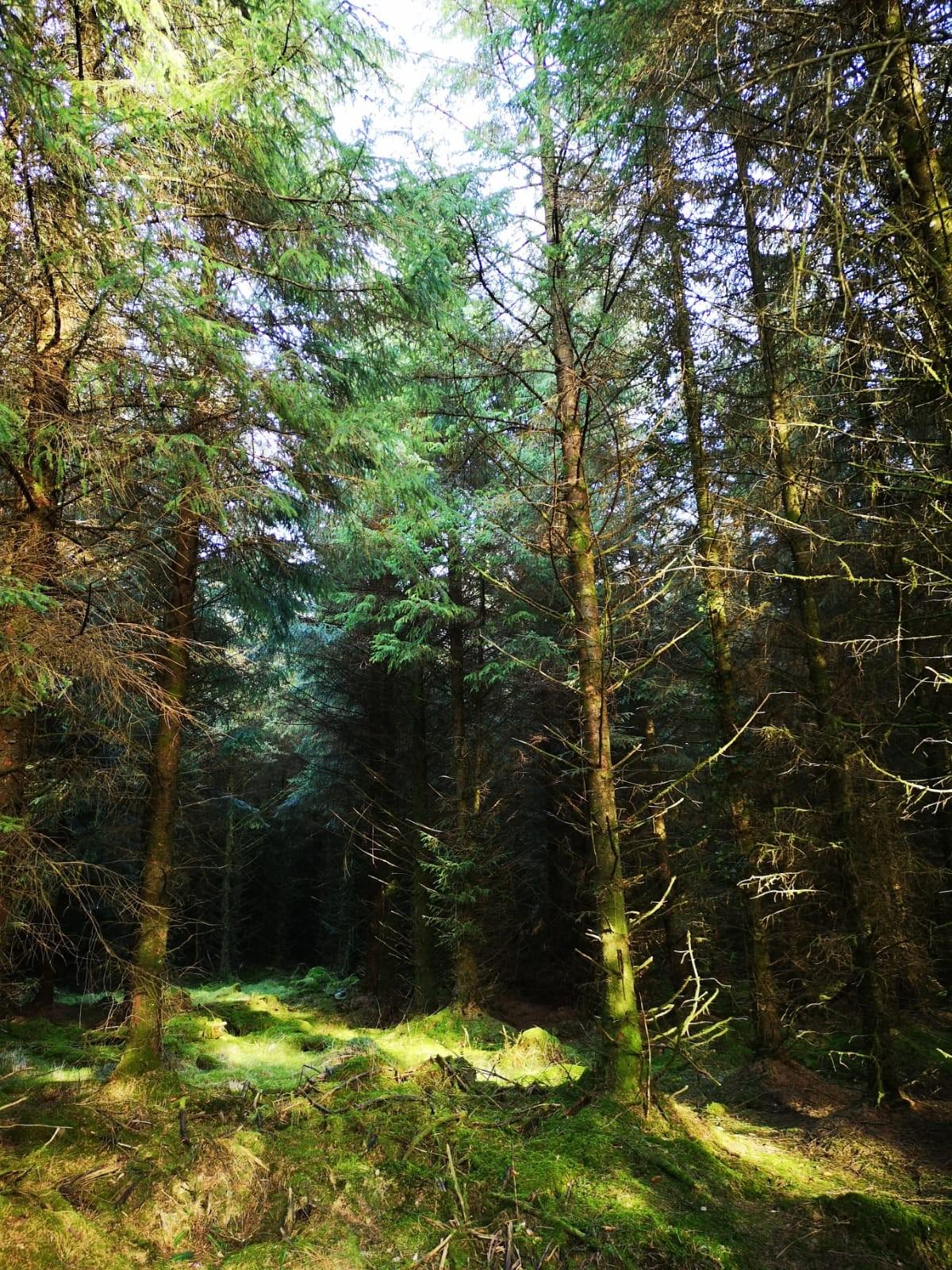 cookworthy forest.jpg
