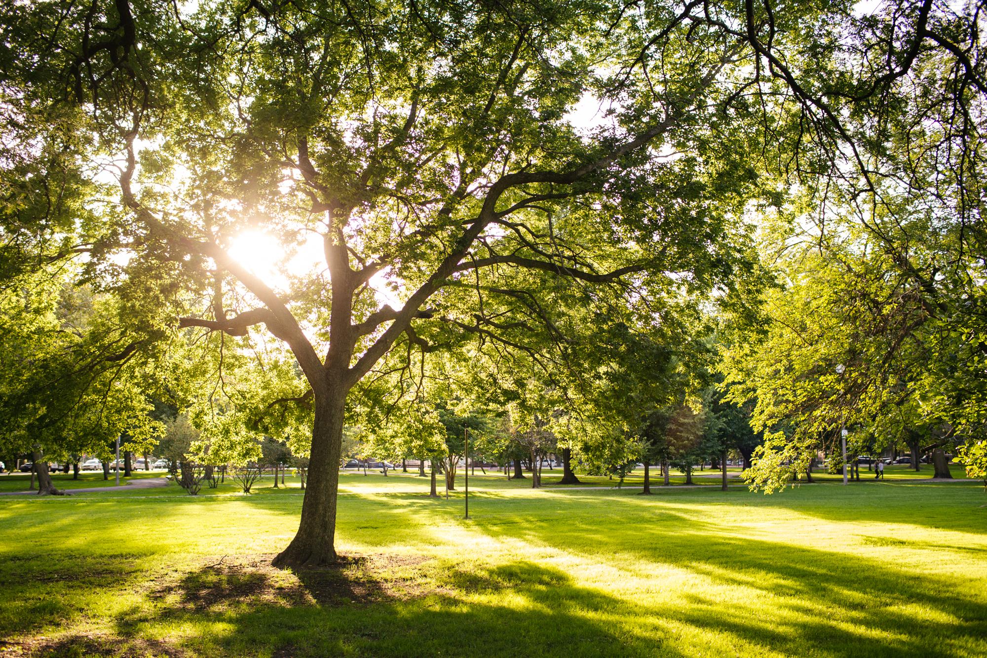 Park Project_Indian Boundary Park_2000px-035.jpg