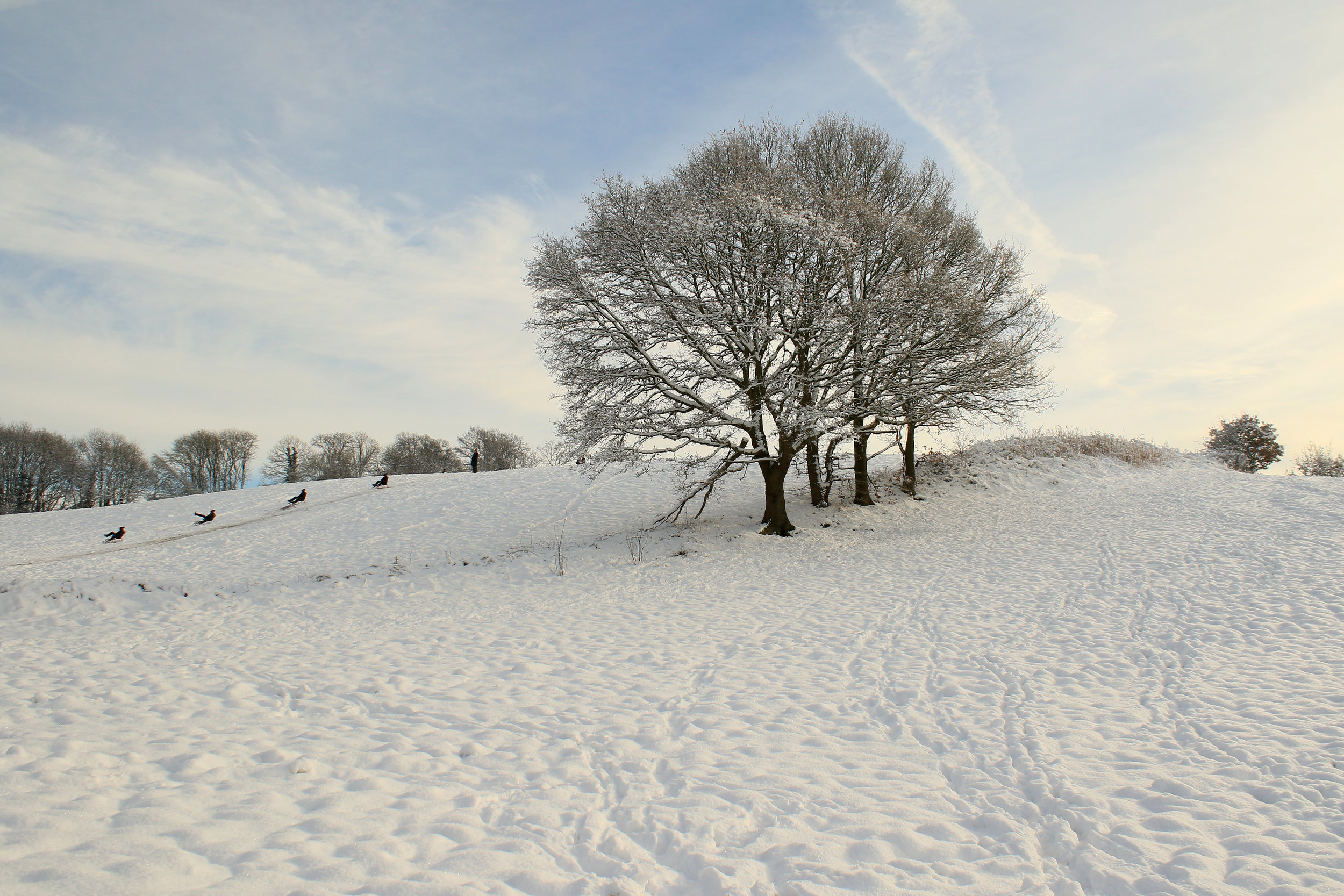 Winter Sledging and Trees