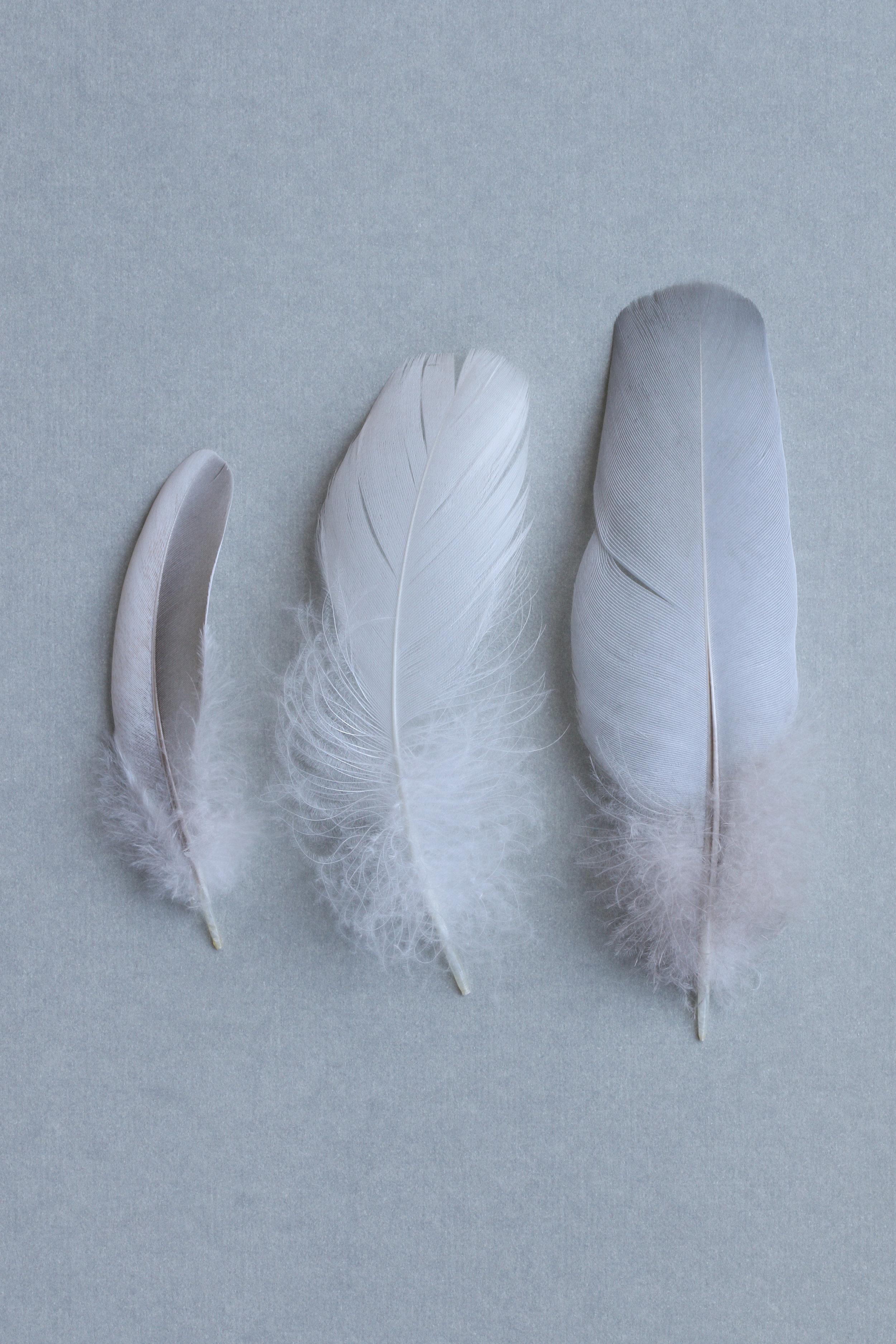 Three Feathers on Grey