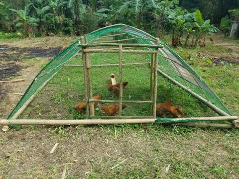Sustainable Agricultural Methods - Bamboo chicken tractor