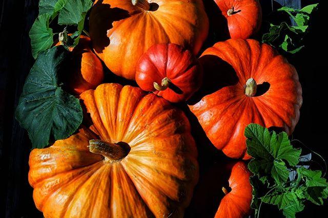 Food tastes way better when you grow your own!!!@capriloungelaax 📷@umberto_mantovano  @laax @swisshostels #caprilounge #capriloungelaax #laax #laaxisniceyo #swisshostels #growyourownfood🌱 #colors🎨 #pumpkins #kürbis