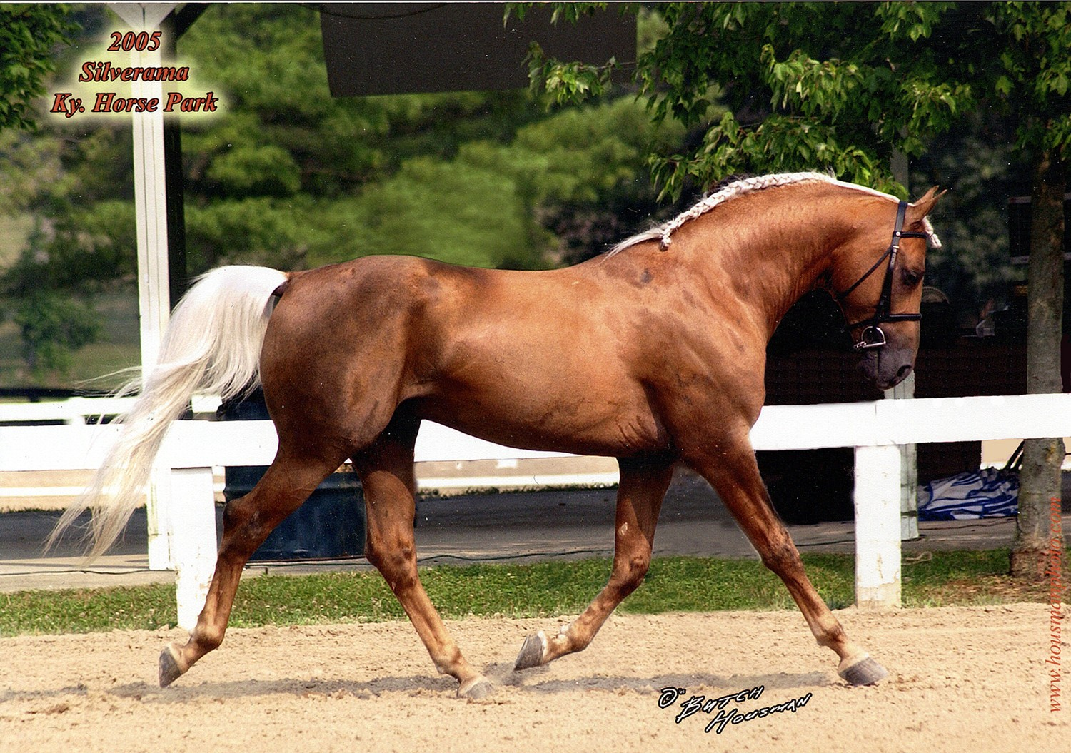 GD Sport Horse facing right.jpg