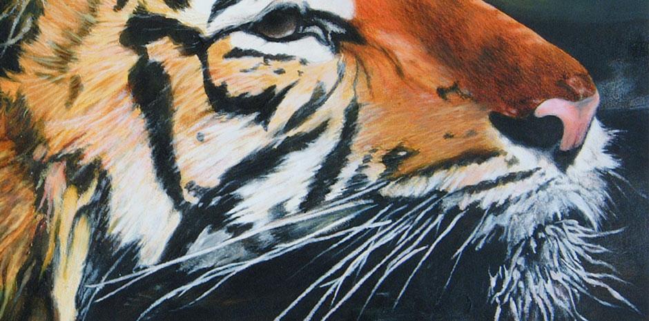 Tiger_CloseUp1.jpg
