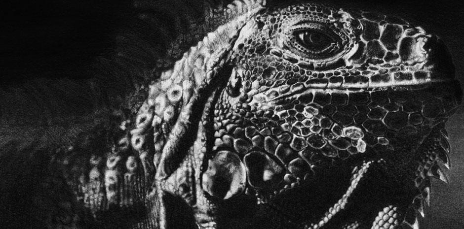 Iguana_CloseUp.jpg