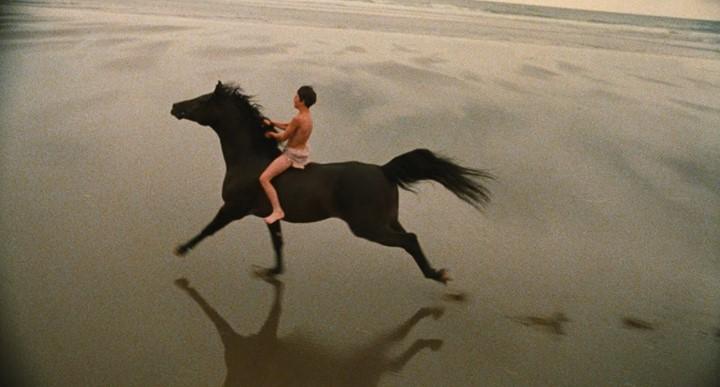 Black stallion 3.jpg