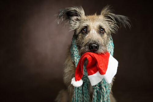 holiday decor pet safety dog cat puppy kitty santa hat scarf.jpg