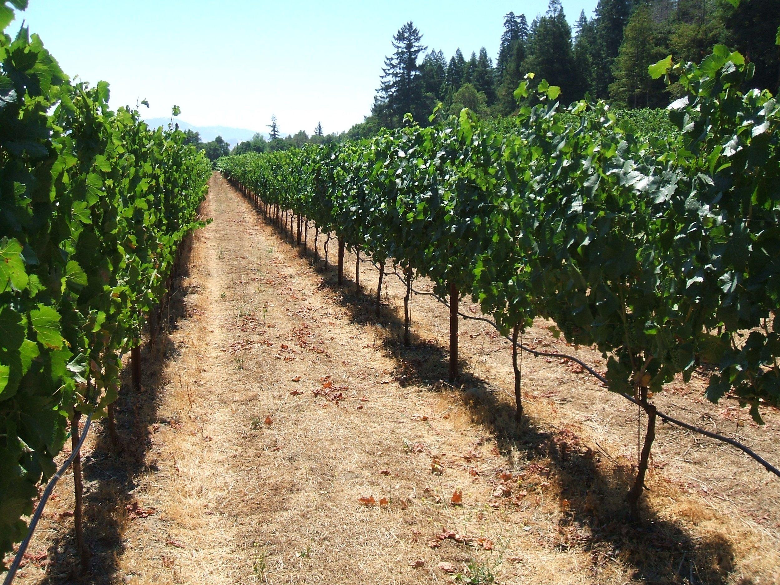 ORDWAY, DEEP END FARMS - Pinot Noir