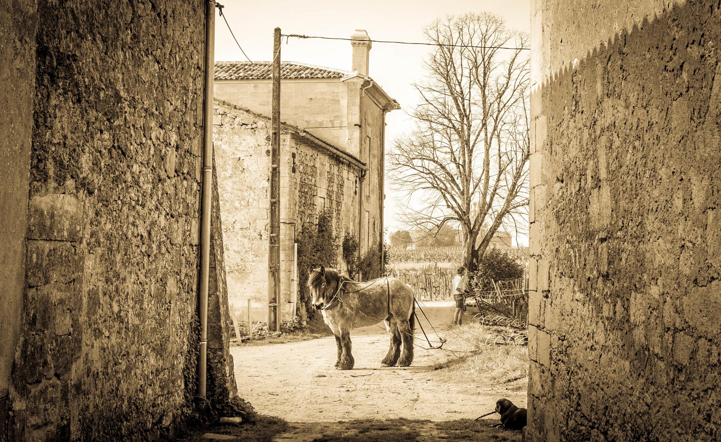 """Spiro"", Chateau le Puy, Saint Cibard"