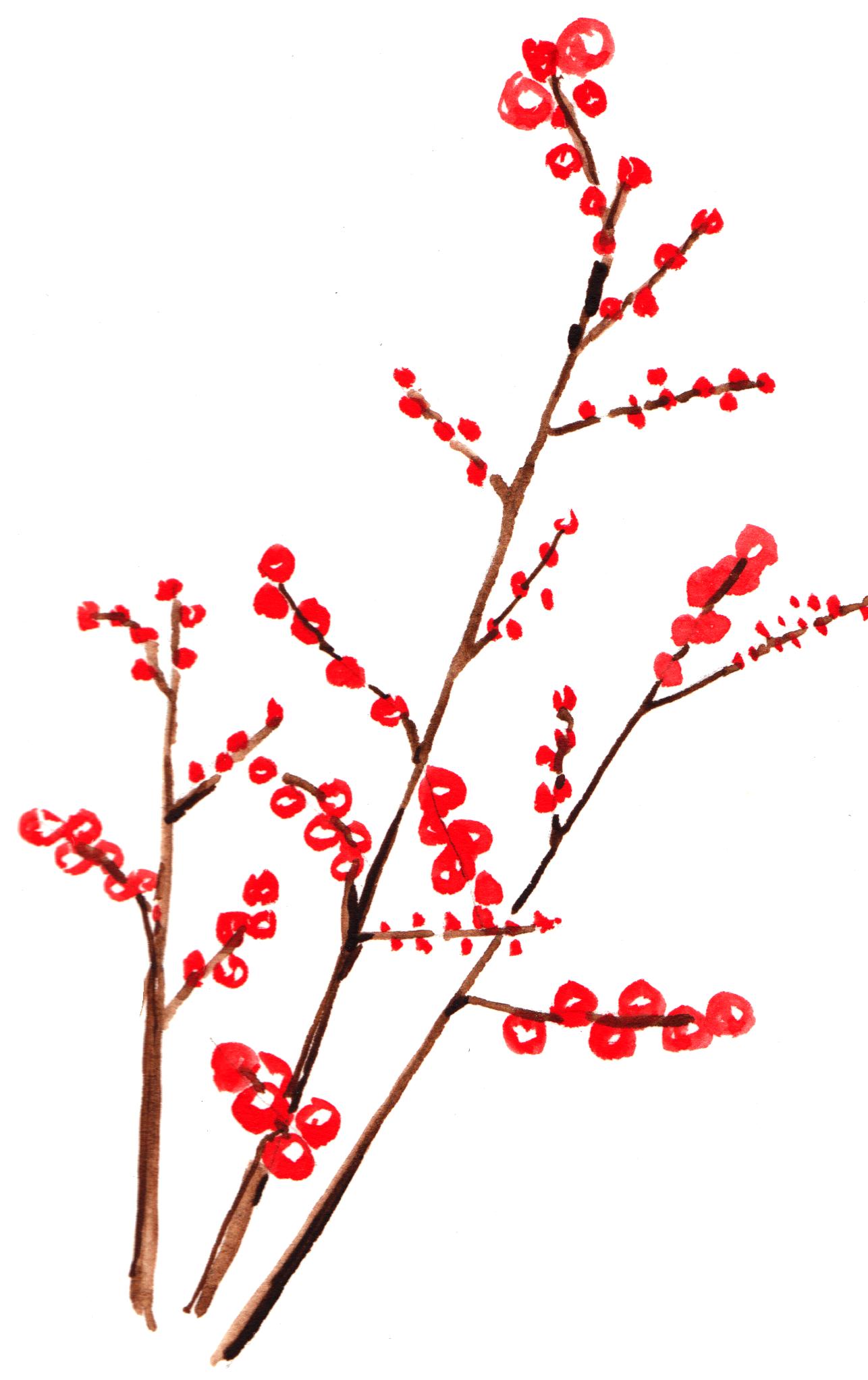 Ilex_Berries_1.png
