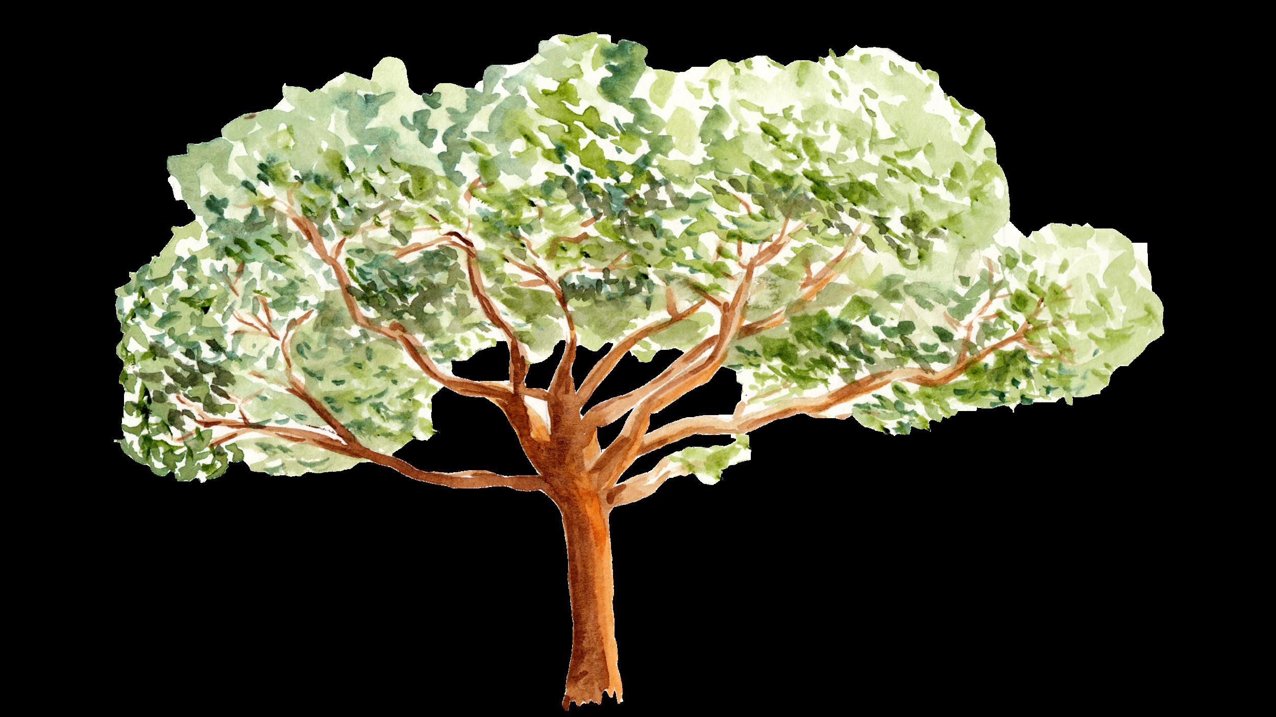 Kapoc_Tree.png