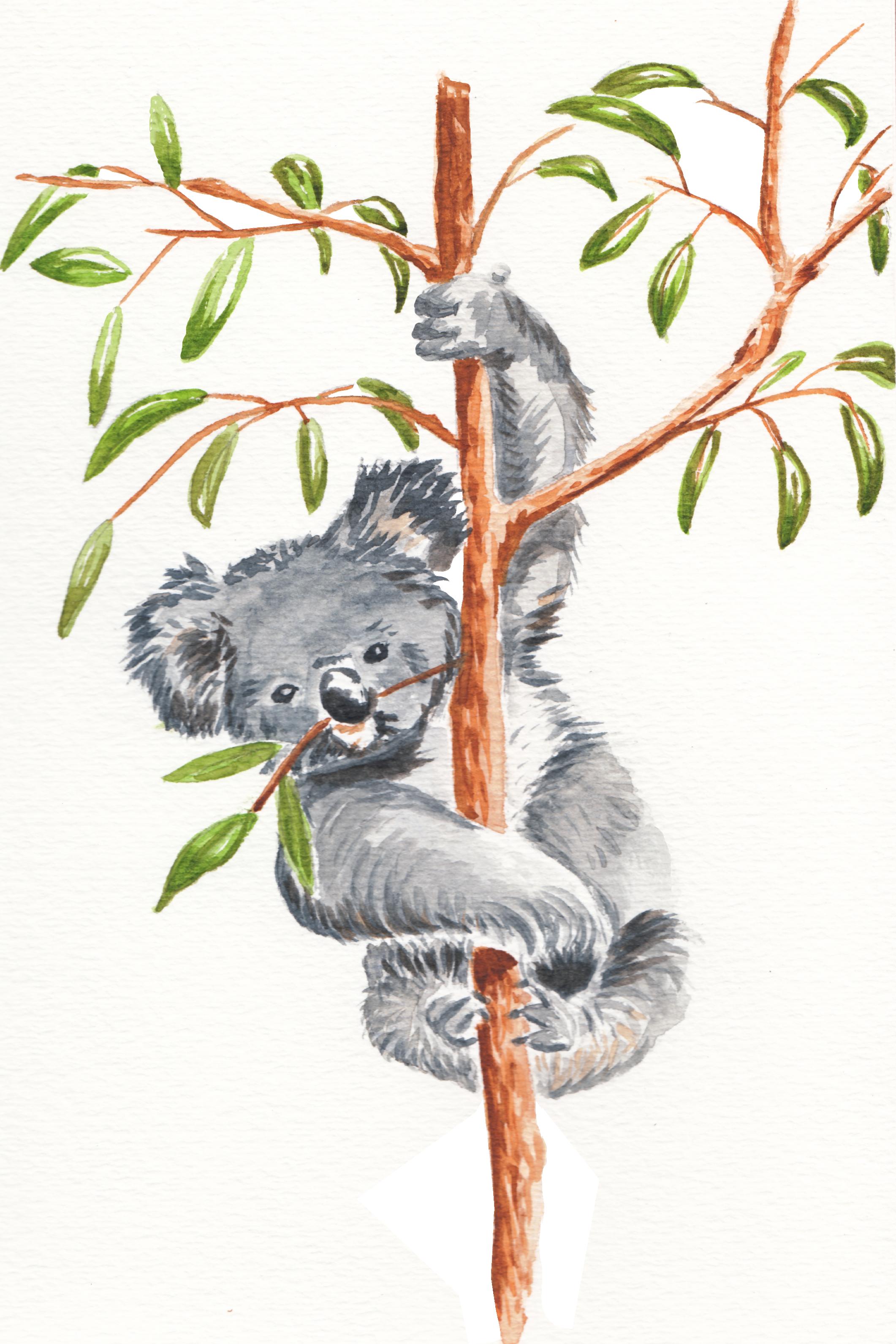 Koala_Painted_Isolated.png