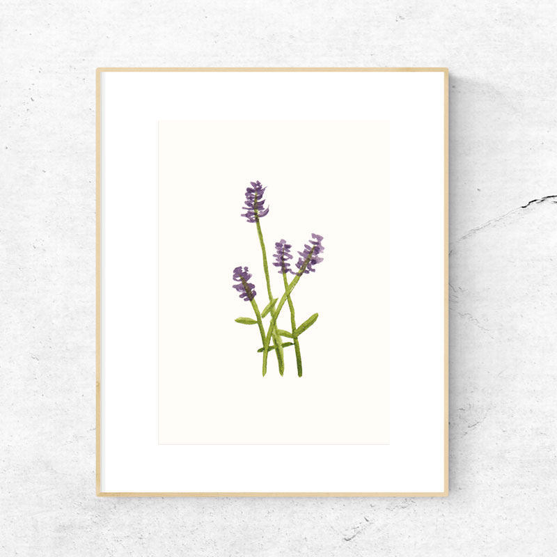 KJV_Lavender.jpg