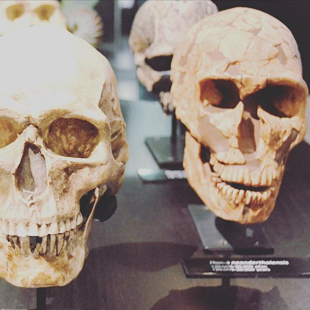 """It's almost Halloween but that's not why these skulls are posted in my latest blog... Click link in bio to see how this connects to """"Why Cosmetic Procedures Can Look So Unnatural"""" ☠️💀💉🤭 . . . . . . . #faceyoga #facialtraining #facialtrainer #facialexercise #facemuscles #yogaeverydamnday #facialfitness #faceworkout #healthyface"""