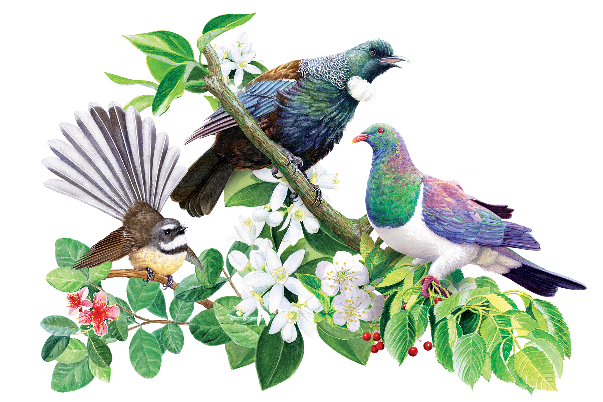 Birds-for-Catalogue.png