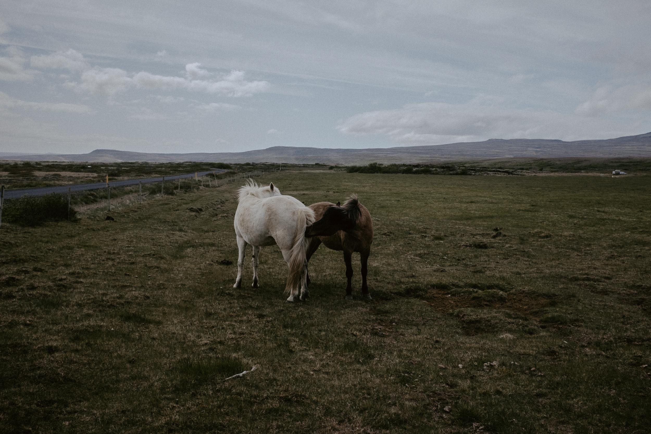Iceland-399.jpg