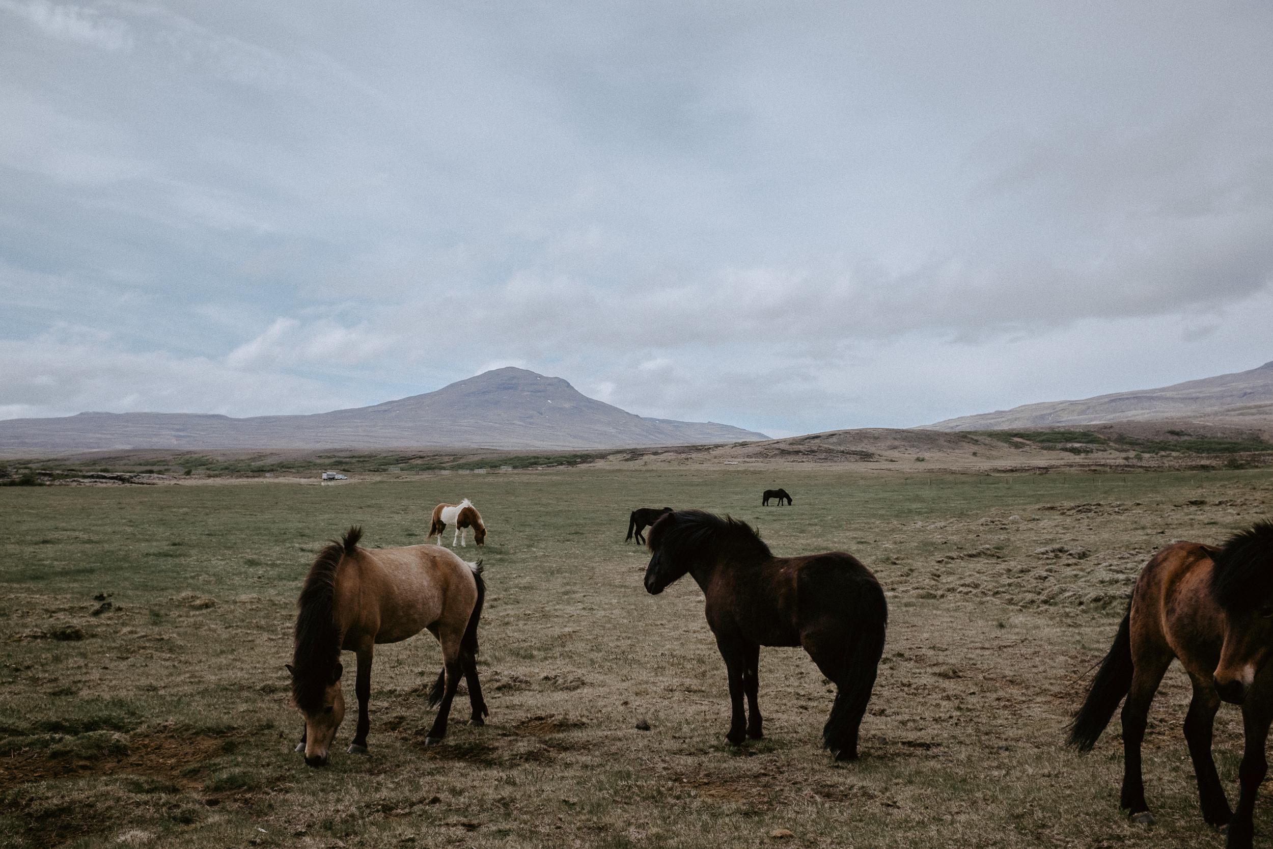 Iceland-404.jpg